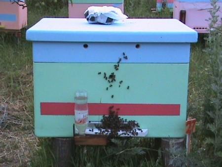 Пчелиный улей из пенополиуретана